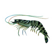 Health management, disease prevention and treatment in shrimp